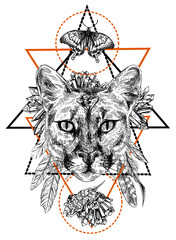puma sketch illustration