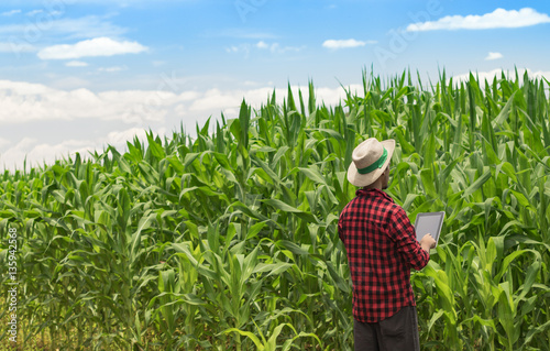 Farmer With Hat Using Digital Tablet Computer In Cultivated Corn Field Plantation Modern Technology Application