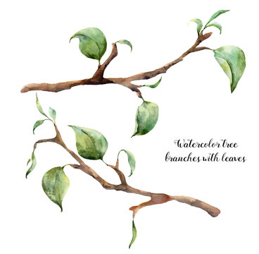 Watercolor tree branches with leaves. Hand painted floral illustration isolated on white background. Spring elements for design.