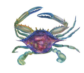 watercolor painting blue crab