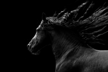 Black horse running on black background