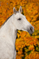 Portrait of nice white horse