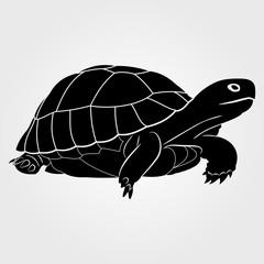 Turtle  icon on a white background