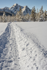 Snowmobile trail leads to the mountains