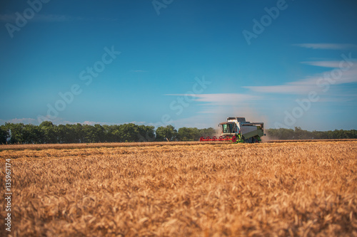 Wall mural Combine harvester agriculture machine harvesting golden ripe whe