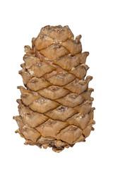 Pine lump
