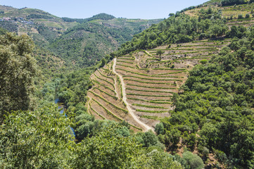 Europe, Portugal, Douro Valley, Porto, a region that runs from the Spanish-Portugal border to the coast. Valley is lined with steeply sloping hills, vineyards.