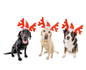 three dogs dressed up in reindeer antlers for christmas on a whi