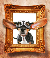 a vintage photo frame with a basset hound wearing goggles coming