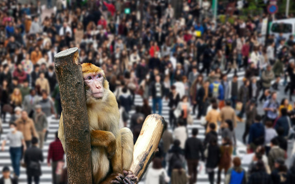 Monkey in the city thinks about the future of mankind