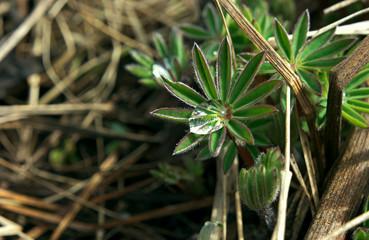 Wild flower green with water drop inside