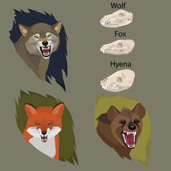 Predator mammals illustration design set