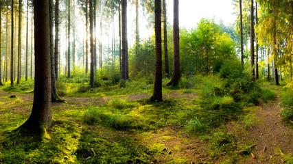 Idyllischer Sonnenaufgang im Wald