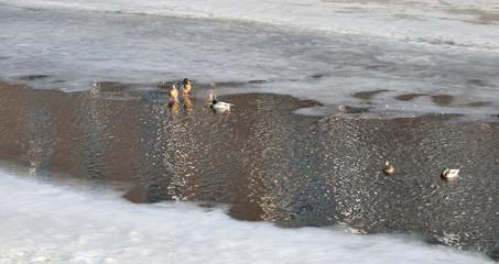 River at winter.