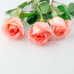 Three pink coral rose on white wooden table
