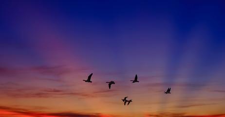 Foto auf Leinwand Rosa hell Birds at sunrise or sunset nature concept