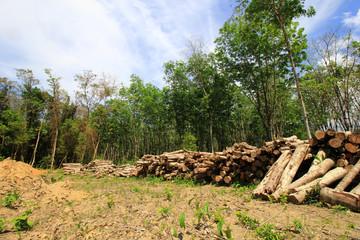 Deforestation, logging, environmental damage