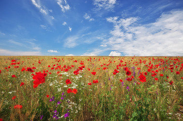 Wall Mural - Meadow of wheat and poppy.
