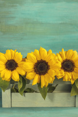 Toned photo of bouquet of yellow sunflowers on teal
