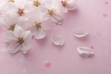 桜の花のイメージ