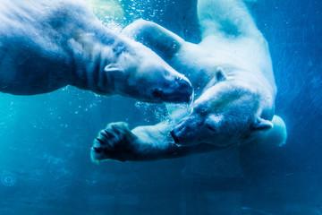 Deurstickers Ijsbeer Polar Bears Underwater