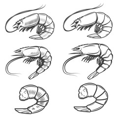Set of shrimps icons isolated on white background. Seafood. Desi