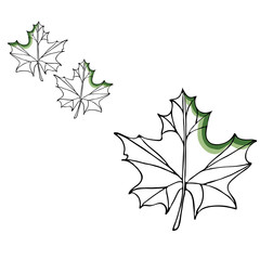 Leaf vector drawing set. Isolated tree leaves. Herbal engraved style illustration. Organic product sketch. Hand drawn leaf