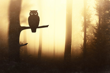 Owl silhouette on tree branch in forest in sunset light, surreal forest scene