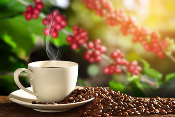 Cup of coffee with smoke and coffee beans on coffee tree backgro