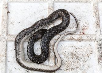 snakes at market