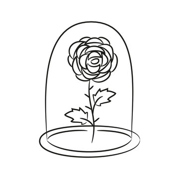 Rose in a flask of glass. on the white background for your desig