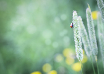 Ladybug sitting on grass.