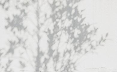 shadows leaf on a white concrete rough texture wall Wall mural
