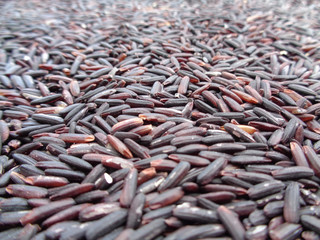 Close-up of Uncooked Dark Violet Color Rice-berry Rice, Background, Texture