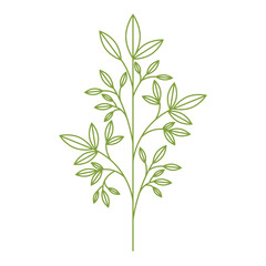 leafs plant isolated icon vector illustration design