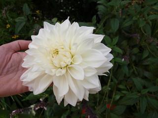 Fleur blanche!