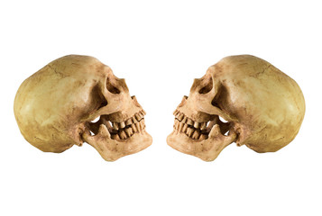 Skull side left and right view on white background / Image Isolate on white background with clipping path