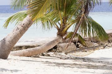 Isola dei Caraibi con una palma sulla spiaggia bianca e un amaca in primo piano