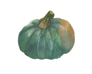 Watercolor pumpkin vegetable illustration for fresh logo design, poster for restaurant, banner for vegan shop, market. Fresh vegetables art leaflet for agriculture theme, farm market, vegetarian menu
