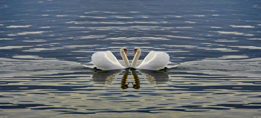 love swans