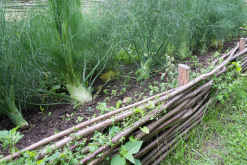 wooden raised beds with fennel in medieval style garden