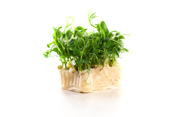 Organic pea sprouts in white background