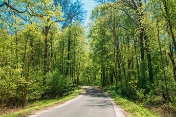 Asphalt Road Through Spring Trees Woods Forest In Sunny Day. Sunny Day