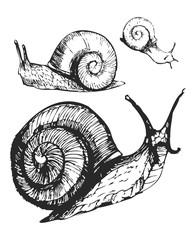 Snails sketch