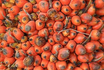 Closeup oil palm - African oil palm, Macaw fat, (Elaeis guineensis Jacq.)