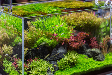 decorative aquarium with plant from glass