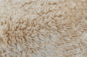 Dog fur abstract pattern