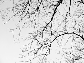Branch of dead tree
