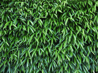 leaf and bush plant wall