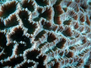 Coral Reef Texture, Macro